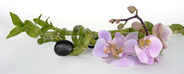 květina, bambus, kamínek