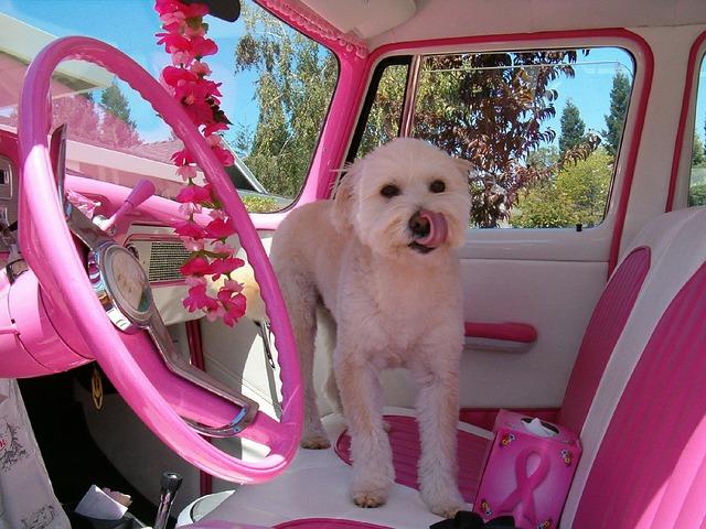 růžový interiér vozu