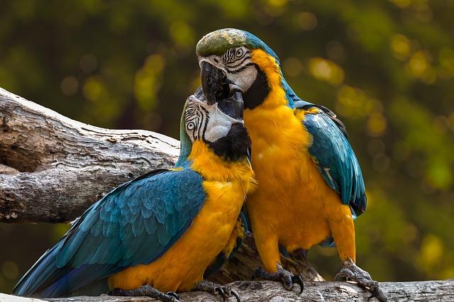 exotičtí ptáci
